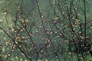 Картинки птицы в лесу ранней весной